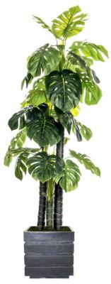 78 Inch Tall Indoor/Outdoor Monstera Ceriman In Faux-Concrete Fiberstone Pot