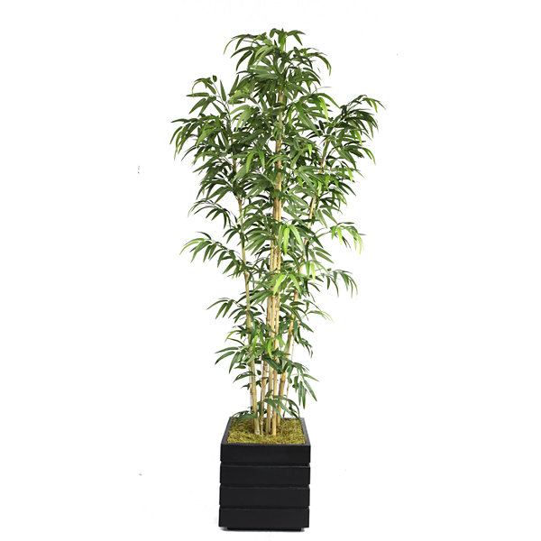 Laura Ashley 78 Inch Tall Natural Bamboo Tree In 14 Inch Modern Planter