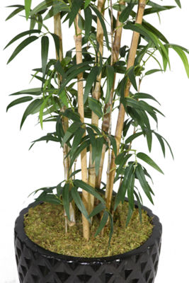 Laura Ashley 78 Inch Tall Natural Bamboo Tree In 16 Inch Planter