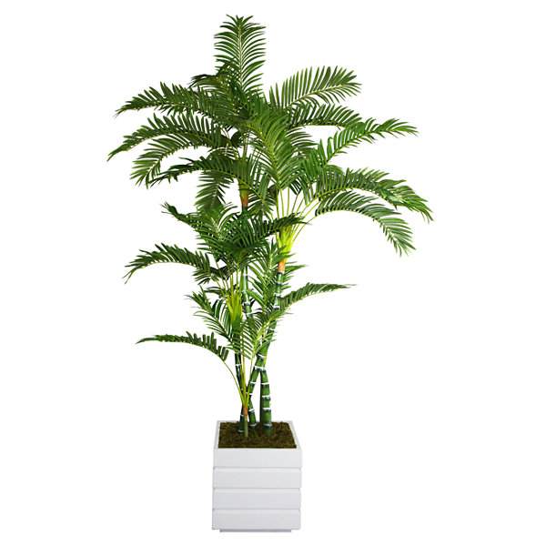 Laura Ashley 78 Inch Tall Palm Tree In 14 Inch Fiberstone Planter