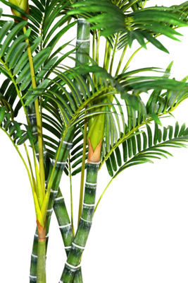 Laura Ashley 78 Inch Tall Palm Tree In 16 Inch Fiberstone Planter