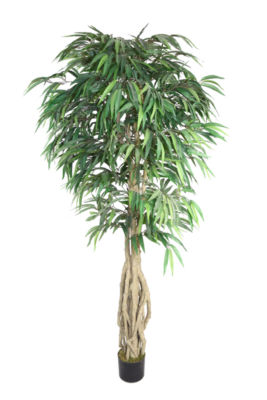 Laura Ashley Willow Ficus
