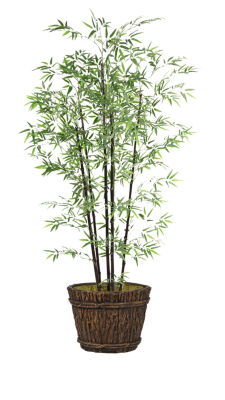 80 Inch Tall Bamboo Tree In Planter