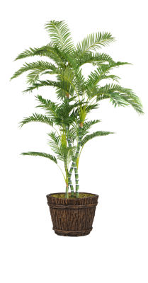80 Inch Tall Palm Tree In Planter