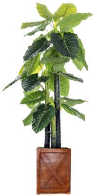 Laura Ashley 81 Inch Tall Indoor/Outdoor Elephant Ear Plant In Fiberstone Pot