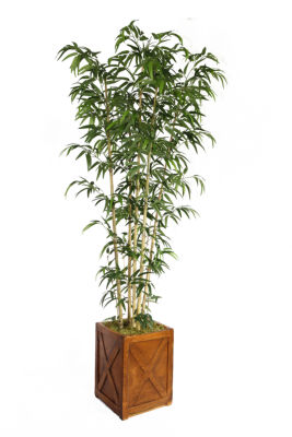 81 Inch Tall Natural Bamboo Tree In 13 Inch Planter
