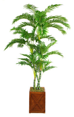 81 Inch Tall Palm Tree In 13 Inch Fiberstone Planter
