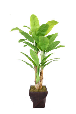 Laura Ashley 82 Inch Tall Banana Tree With Real Touch Leaves In Planter