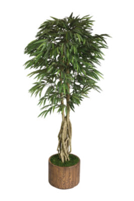 Laura Ashley 83 Inch Tall Willow Ficus With Multiple Trunks In Modern Planter
