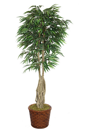 Laura Ashley 83 Inch Tall Willow Ficus With Multiple Trunks In Planter