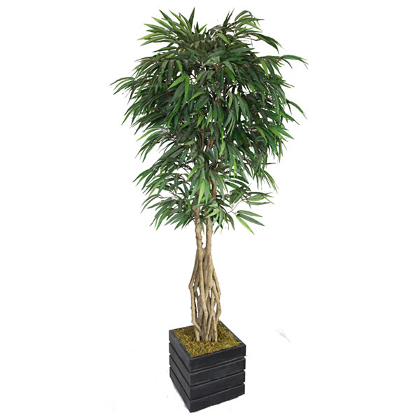 Laura Ashley 84 Inch Tall Willow Ficus With Multiple Trunks In Modern Planter