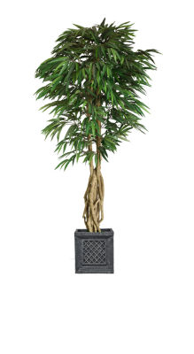 Laura Ashley 84 Inch Tall Willow Ficus With Multiple Trunks In Traditional Planter