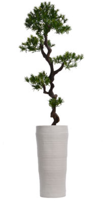 Laura Ashley 69 Inch Tall Yucca Tree In Planter