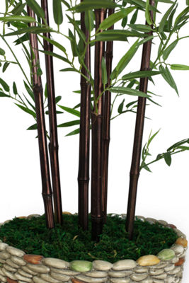86 Inch Tall Black Bamboo Tree In 16 Inch Planter