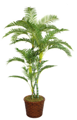 77 Inch Tall Palm Tree In 17 Inch Fiberstone Planter