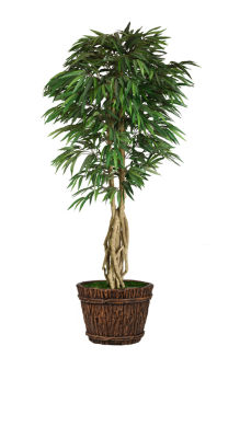 Laura Ashley 86 Inch Tall Willow Ficus With Multiple Trunks In Planter