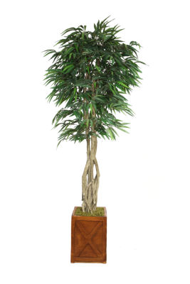 Laura Ashley 87 Inch Tall Willow Ficus With Multiple Trunks In Planter
