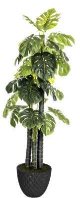 Laura Ashley 77.6 Inch Tall Indoor/Outdoor Monstera Ceriman In Honeycomb Pot