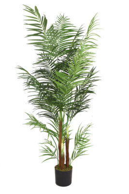 76 Inch Tall Areca Palm Tree