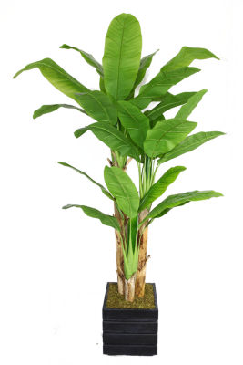 Laura Ashley 78 Inch Tall Banana Tree With Real Touch Leaves In Modern Planter