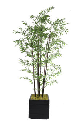 78 Inch Tall Black Bamboo Tree In 14 Inch Modern Planter