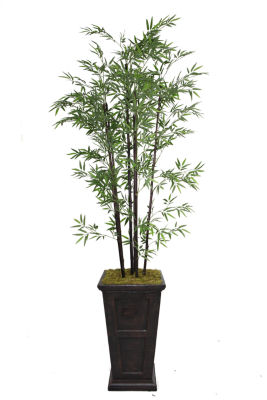 91 Inch Tall Black Bamboo Tree In 16 Inch Planter