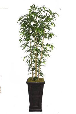 Laura Ashley 91 Inch Tall Natural Bamboo Tree In 16 Inch Planter