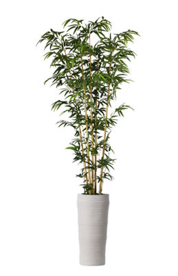 93 Inch Bamboo Tree In Natural Poles In Planter