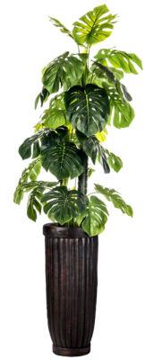 93 Inch Tall Indoor/Outdoor Monstera Ceriman In Cylinder Fiberstone Planter