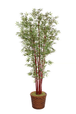 97 Inch Tall Harvest Bamboo Tree In 17 Inch Planter