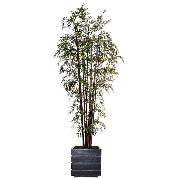 98 Inch Tall Harvest Bamboo Tree In 14 Inch Planter