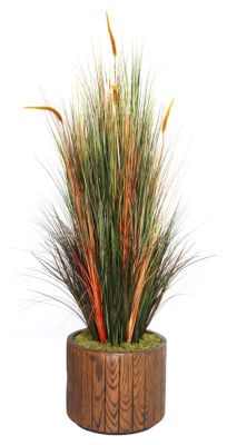 Laura Ashley 65 Inch Tall Onion Grass With Cattails In 16 Inch Planter