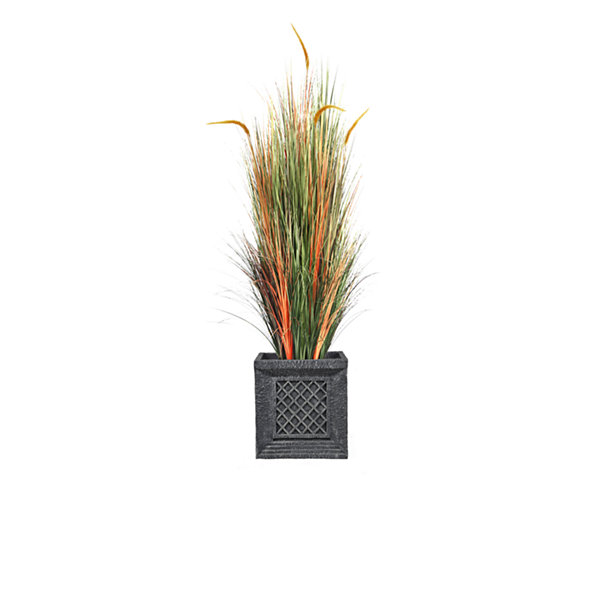 66 Inch Tall Onion Grass With Cattail In Planter