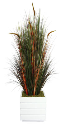 Laura Ashley 66 Inch Tall Onion Grass With Cattails In 14 Inch Planter