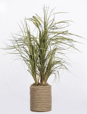 Laura Ashley Grass