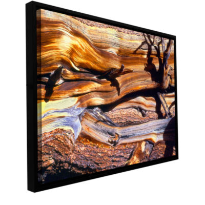Brushstone ancient bristlecone Gallery Wrapped Floater-Framed Canvas Wall Art
