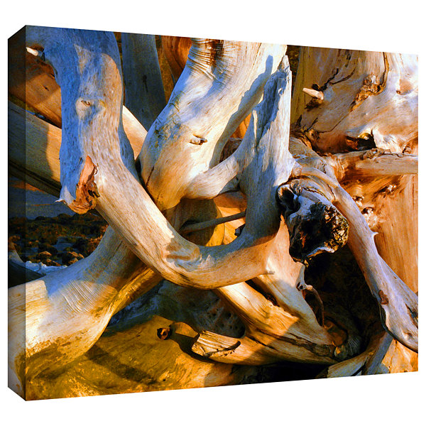 Brushstone Drift Log Detail Gallery Wrapped CanvasWall Art