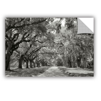Brushstone Live Oak Avenue Removable Wall Decal