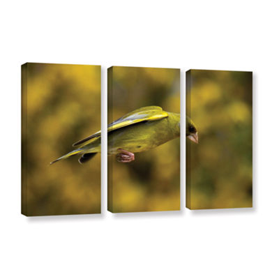 Brushstone Finch Leaping 1 3-pc. Gallery Wrapped Canvas Wall Art