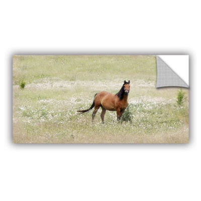 Brushstone Equine Stare Removable Wall Decal