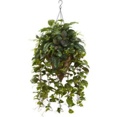 Vining Mixed Greens With Cone Hanging Basket