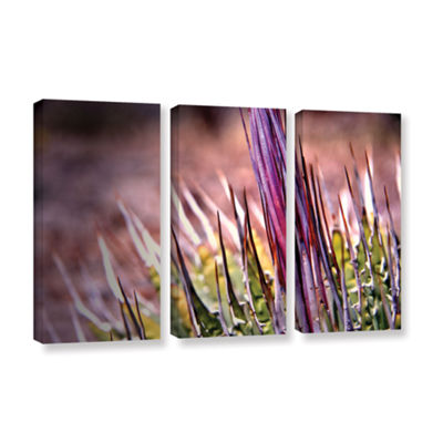 Brushstone Agave 3-pc. Gallery Wrapped Canvas WallArt