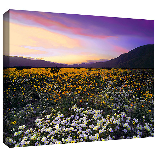 Brushstone ADJ borrego desert spring Gallery Wrapped Canvas Wall Art