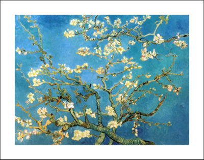 Brushstone Almond Blossom Canvas Wall Art