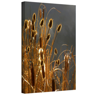 Brushstone Cat Tails And Storm Light Gallery Wrapped Canvas Wall Art