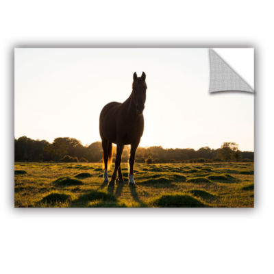 Brushstone Brown Horse Looks Forward Removable Wall Decal
