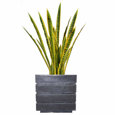 41 Inch Tall Snake Plant In Faux-Concrete Planter