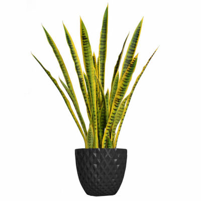 41 Inch Tall Snake Plant In Faceted Planter
