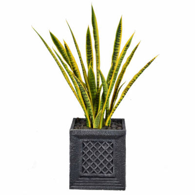 41 Inch Tall Snake Plant In Traditional Planter