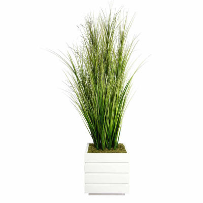 66 Inch Tall Onion Grass With Twigs In 14 Inch Planter